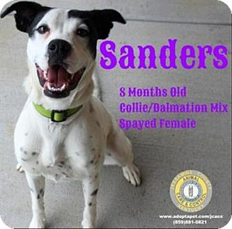 Adopt A Pet :: Sanders  - Nicholasville, KY
