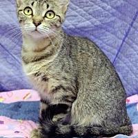 Adopt A Pet :: Sol - South Bend, IN