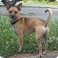 Adopt A Pet :: Rippley - Plainfield, CT