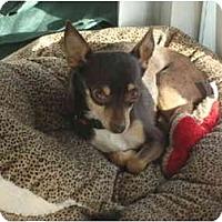 Adopt A Pet :: Bruce - Phoenix, AZ