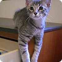 Adopt A Pet :: Brann - Byron Center, MI