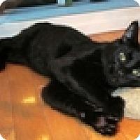 Adopt A Pet :: Sundance - Vancouver, BC
