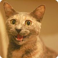 Adopt A Pet :: Polly - Canoga Park, CA
