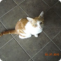 Adopt A Pet :: Sammy - Riverside, RI