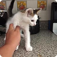 Adopt A Pet :: Andrew - McDonough, GA