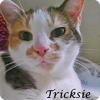 Adopt A Pet :: Tricksie - Ocean City, NJ
