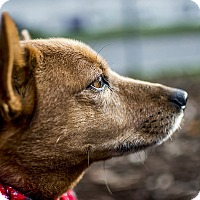 Adopt A Pet :: Moxie - Seattle, WA