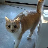 Adopt A Pet :: Nate - Speedway, IN