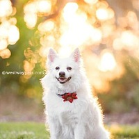 Adopt A Pet :: Pretty - El Cajon, CA