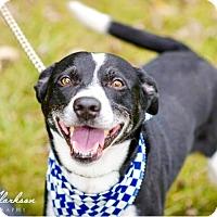 Adopt A Pet :: Duke - RESCUED! - Zanesville, OH