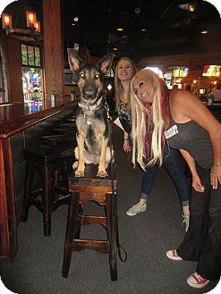 German Shepherd Dog Dog for adoption in Phoenix, Arizona - Daisy Mae