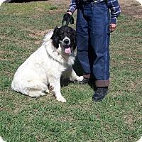 Adopt A Pet :: Ayla - Questa, NM