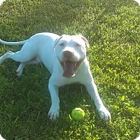 Adopt A Pet :: Chance - Glastonbury, CT