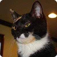 Adopt A Pet :: Zoe - Norwich, NY