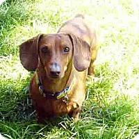 Adopt A Pet :: Dallas - San Jose, CA