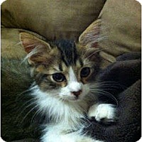 Adopt A Pet :: Darwin - Orlando, FL