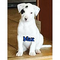 Adopt A Pet :: Max - Marlton, NJ