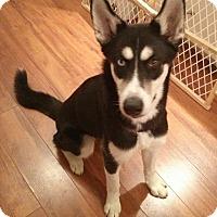 Adopt A Pet :: Luna - Rigaud, QC