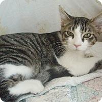 Adopt A Pet :: Russ - Germansville, PA