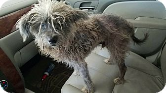 Terrier (Unknown Type, Small) Mix Dog for adoption in Hammond, Louisiana - Charlie