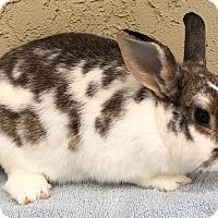 Adopt A Pet :: Abbie - Bonita, CA