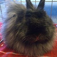 Adopt A Pet :: Harmony - Seattle c/o Kingston 98346/ Washington State, WA