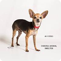 Adopt A Pet :: KENNEL 39 - Corona, CA
