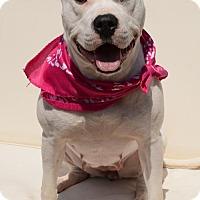 Adopt A Pet :: Valentina - Potomac, MD