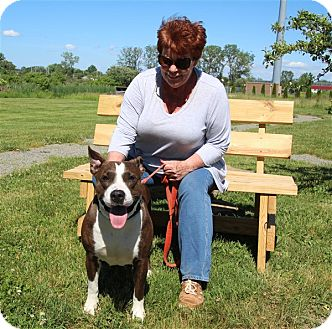 American Pit Bull Terrier Mix Dog for adoption in Elyria, Ohio - Dasia