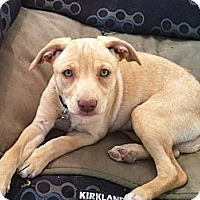 Adopt A Pet :: Valentina - Scottsdale, AZ