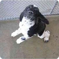 Adopt A Pet :: Marcello - Tacoma, WA