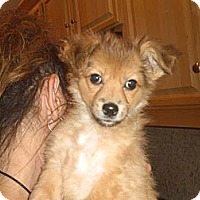 Adopt A Pet :: Louie - Rescue, CA