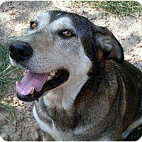 Adopt A Pet :: Mesha - Harrison, AR
