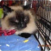 Adopt A Pet :: Blossom - Riverside, RI