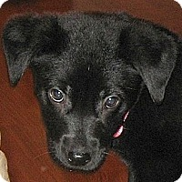 Adopt A Pet :: Claire - Kingwood, TX
