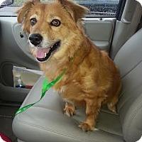 Adopt A Pet :: Winnie - Hamburg, PA