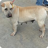 Adopt A Pet :: Mimi - pending - Mira Loma, CA