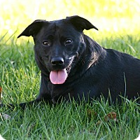 Adopt A Pet :: Lily - Morgantown, WV