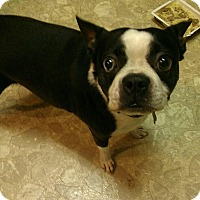 Adopt A Pet :: Chara - Jackson, TN