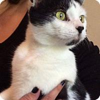 Adopt A Pet :: Jasmine - Transfer, PA