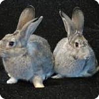 Adopt A Pet :: Scooter & Skylar - Quilcene, WA