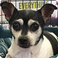 Adopt A Pet :: Marigold - Orlando, FL