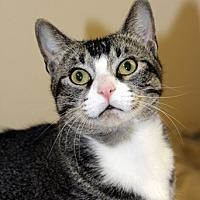 Adopt A Pet :: Mindy - Harrison, NY