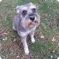 Adopt A Pet :: Sakura - Laurel, MD