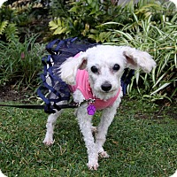 Adopt A Pet :: CAITLIN - Newport Beach, CA