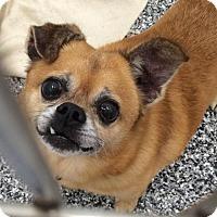 Adopt A Pet :: COCOA - Brunswick, ME