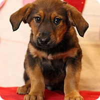 Adopt A Pet :: Angie - Waldorf, MD
