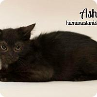 Adopt A Pet :: ASHE - Modesto, CA