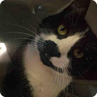 Adopt A Pet :: PAIGE - Rockford, IL