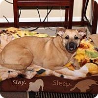 Adopt A Pet :: Ruby - Keyport, NJ
